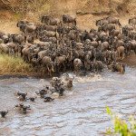 The Great Migration, Kenya, Tanzania