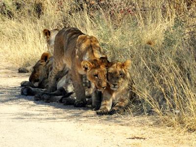 african safari, namibia, botswana