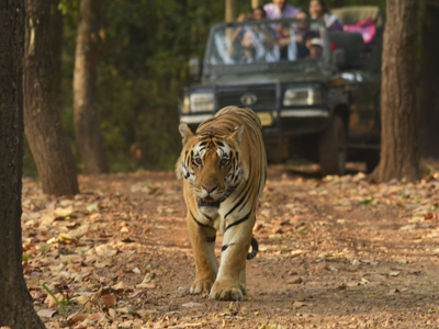 indian safaris, luxury indian safaris