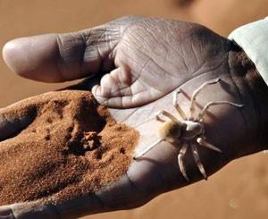 namibia, african safari