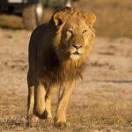 Zimbabwe, Africa, Safari