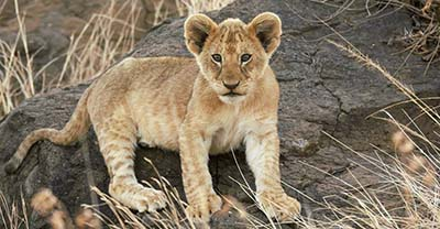 Kenya, Tanzania, Namibia