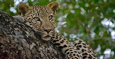 Namibia, Zambia, Botswana