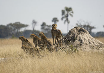 Zimbabwe safari, african safari