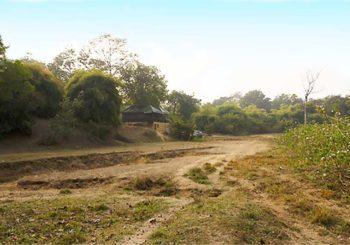 alizanjha, tadoba, tiger reserve